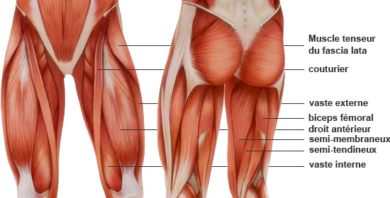 optimisation du developement des quadriceps |